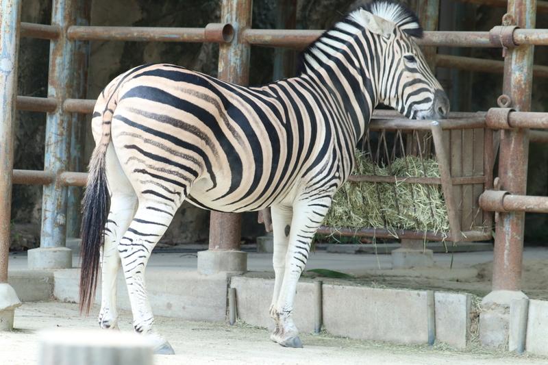 f:id:zoonimal:20201006001600j:plain