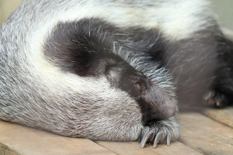 f:id:zoonimal:20201006001653j:plain