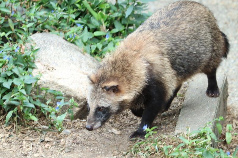 f:id:zoonimal:20201006002038j:plain