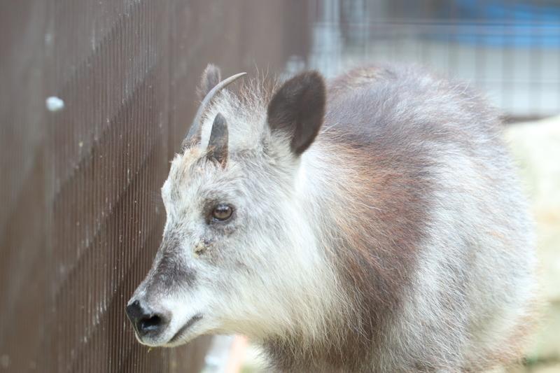 f:id:zoonimal:20201006002057j:plain