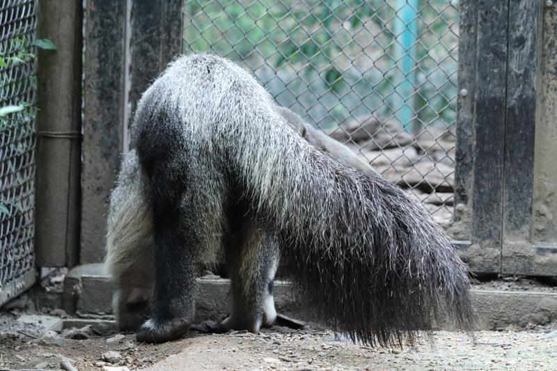 f:id:zoonimal:20201006002501j:plain