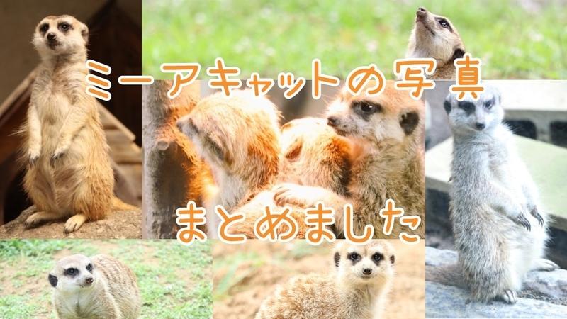 f:id:zoonimal:20201014230818j:plain