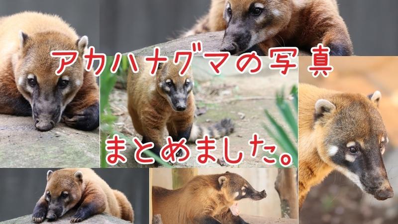 f:id:zoonimal:20201015000203j:plain