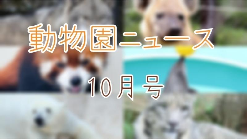 f:id:zoonimal:20201025012542j:plain