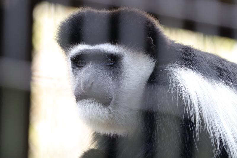 f:id:zoonimal:20201025174823j:plain