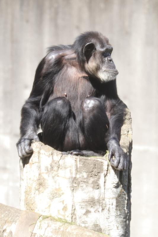 f:id:zoonimal:20201101154227j:plain