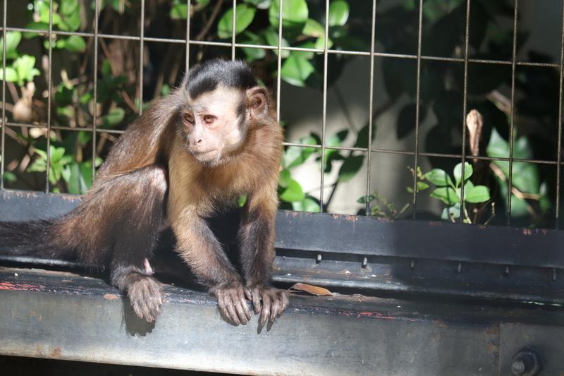 f:id:zoonimal:20201101154307j:plain