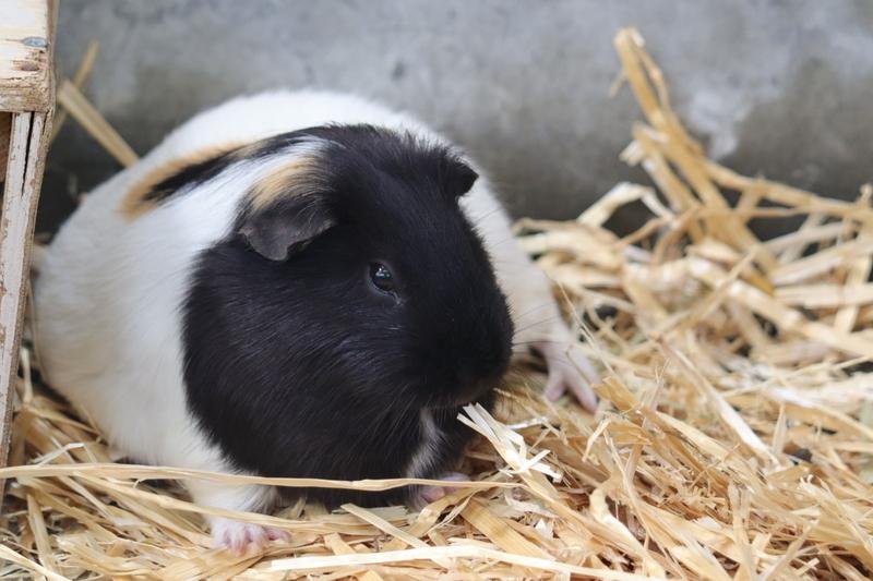 f:id:zoonimal:20201101154449j:plain