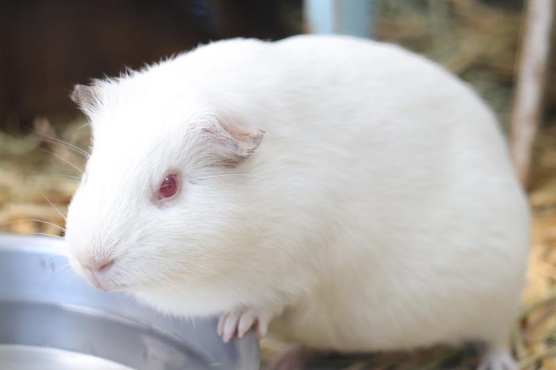 f:id:zoonimal:20201101154459j:plain