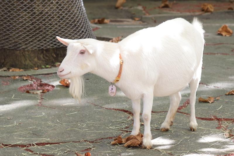 f:id:zoonimal:20201101154622j:plain