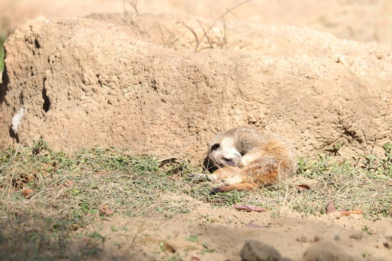 f:id:zoonimal:20201101155002j:plain