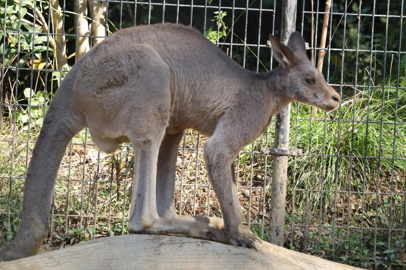 f:id:zoonimal:20201101155206j:plain