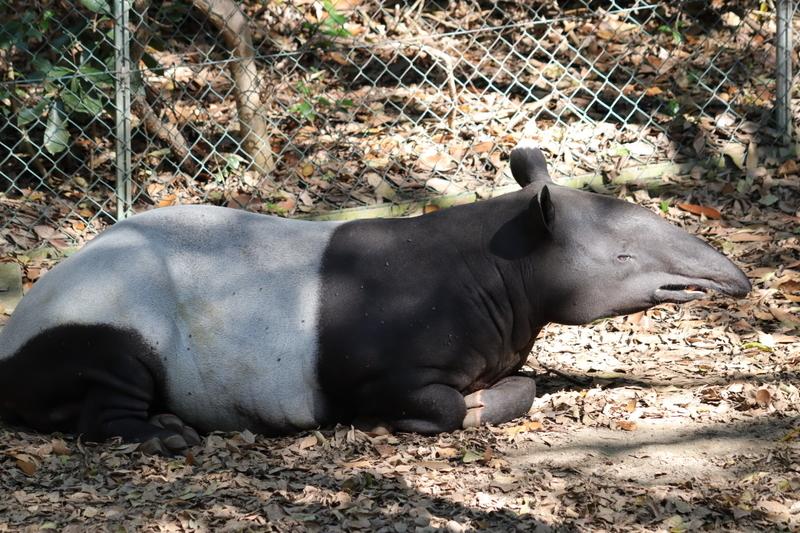 f:id:zoonimal:20201101155250j:plain