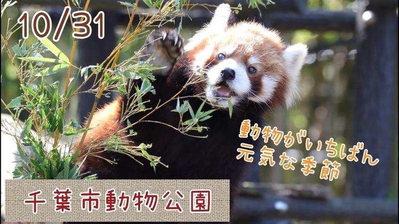 f:id:zoonimal:20201101161803j:plain