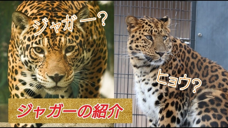 f:id:zoonimal:20201103130644j:plain