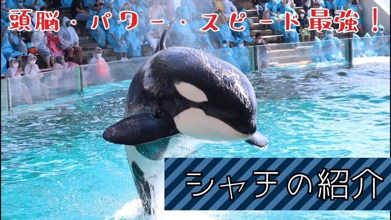 f:id:zoonimal:20201103130657j:plain