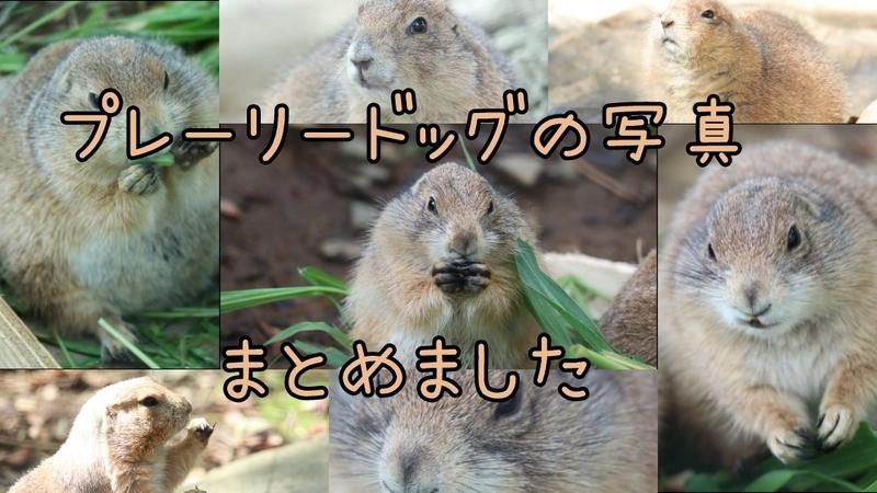 f:id:zoonimal:20201103130701j:plain