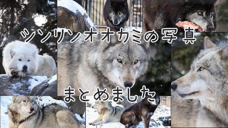 f:id:zoonimal:20201103130705j:plain