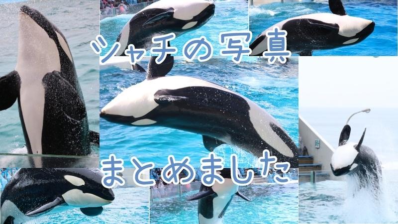 f:id:zoonimal:20201103130713j:plain