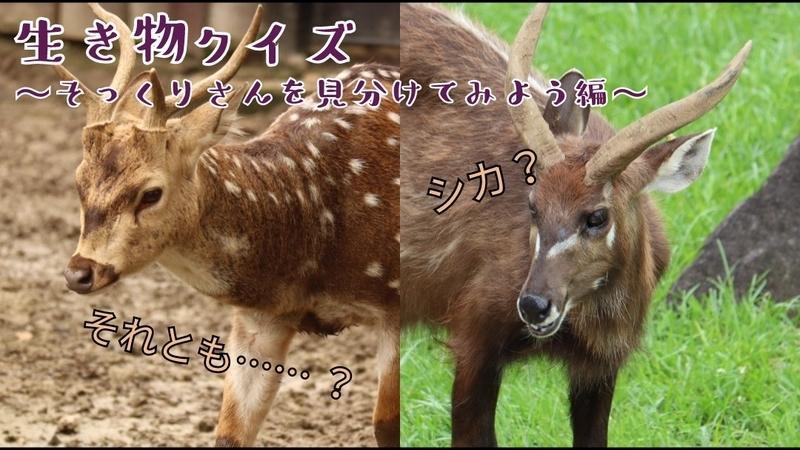 f:id:zoonimal:20201103130723j:plain