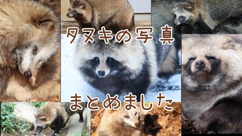 f:id:zoonimal:20201103155134j:plain