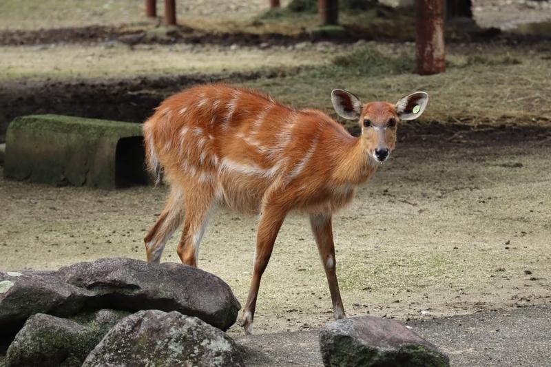 f:id:zoonimal:20201106001010j:plain