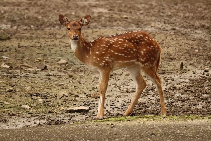 f:id:zoonimal:20201106001048j:plain
