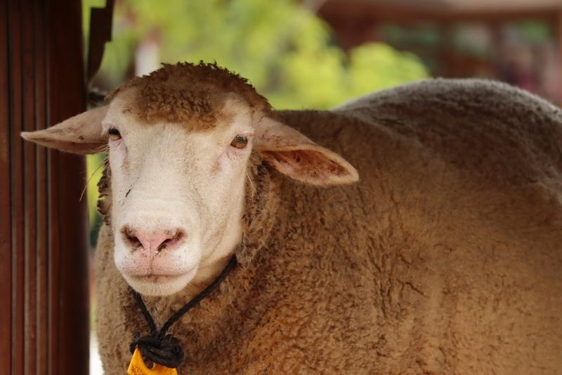 f:id:zoonimal:20201106001145j:plain