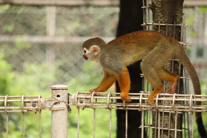 f:id:zoonimal:20201106001241j:plain