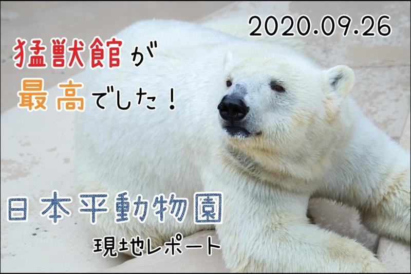 f:id:zoonimal:20201108004841j:plain