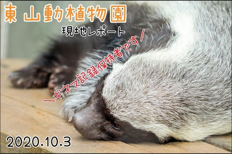 f:id:zoonimal:20201108004853j:plain