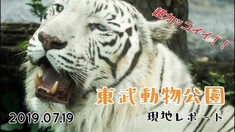 f:id:zoonimal:20201108004857j:plain
