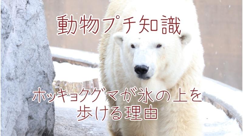 f:id:zoonimal:20201108232309j:plain