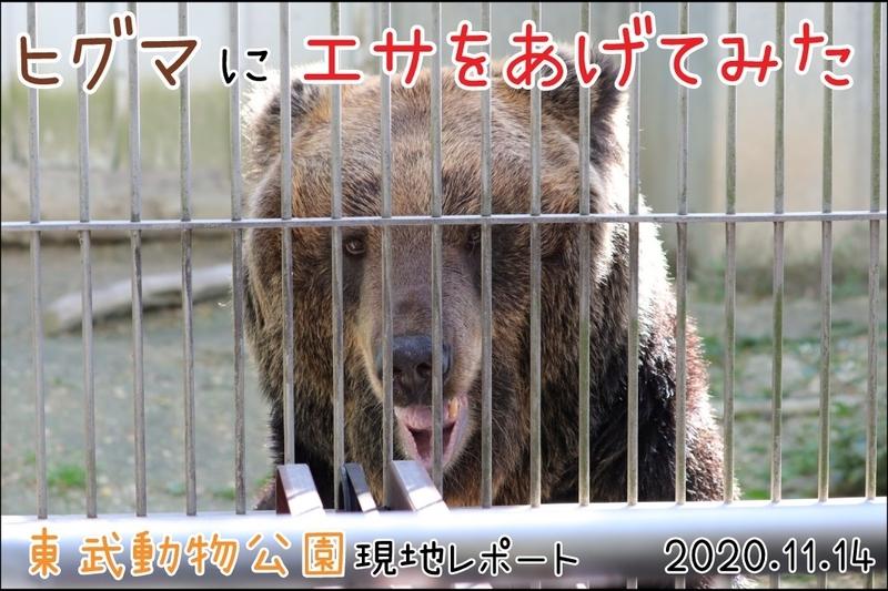 f:id:zoonimal:20201116012149j:plain