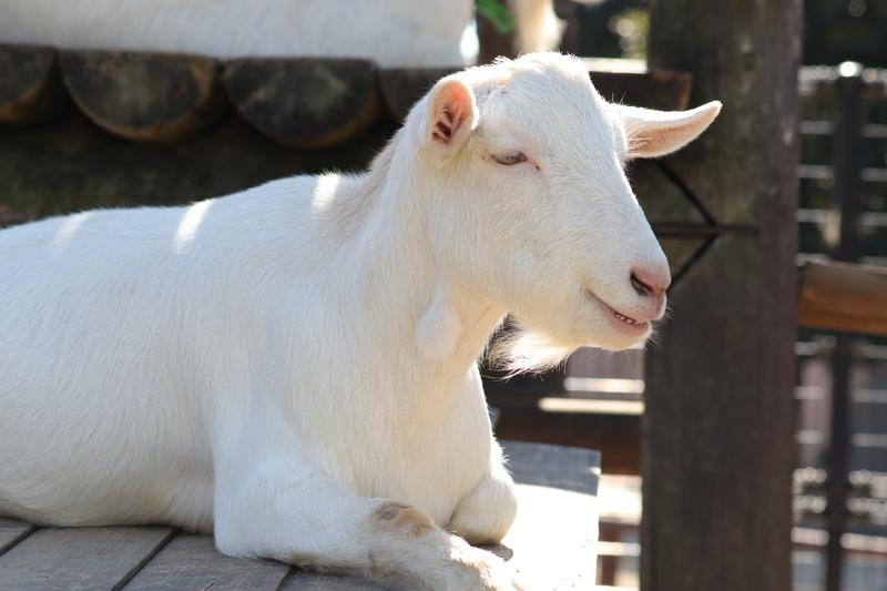 f:id:zoonimal:20201117000732j:plain