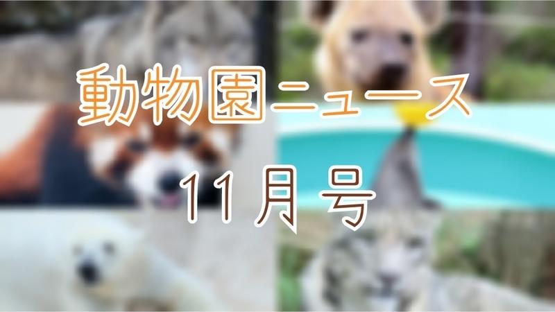 f:id:zoonimal:20201123185456j:plain