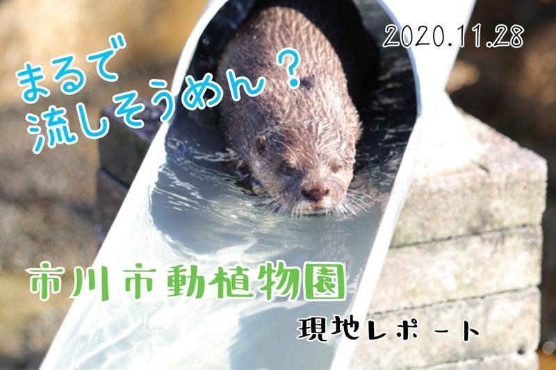 f:id:zoonimal:20201222183005j:plain