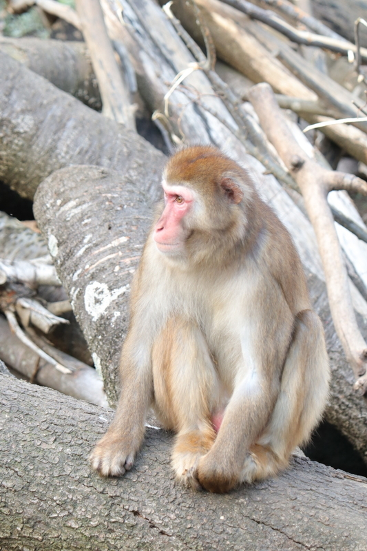 f:id:zoonimal:20201228140344j:plain