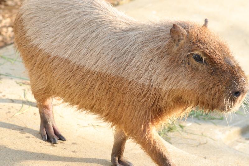 f:id:zoonimal:20201228140501j:plain