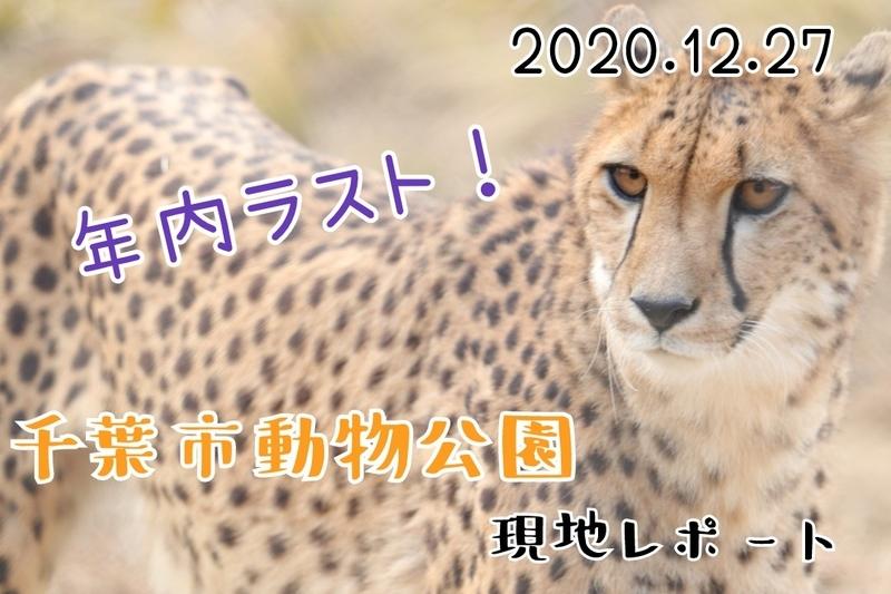 f:id:zoonimal:20201230175706j:plain