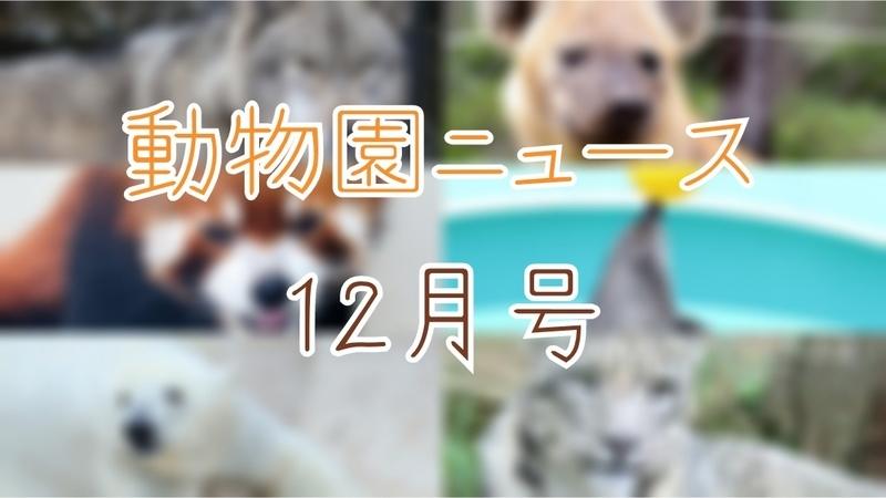 f:id:zoonimal:20201231232727j:plain