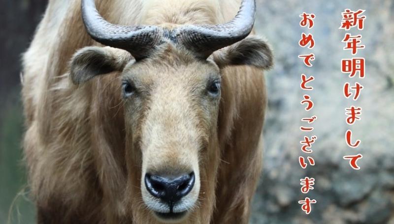 f:id:zoonimal:20210101170220j:plain