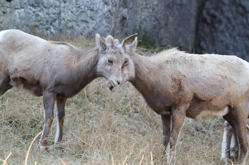 f:id:zoonimal:20210104145503j:plain