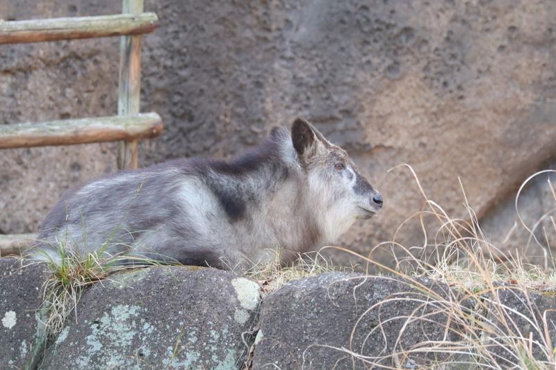 f:id:zoonimal:20210104145818j:plain