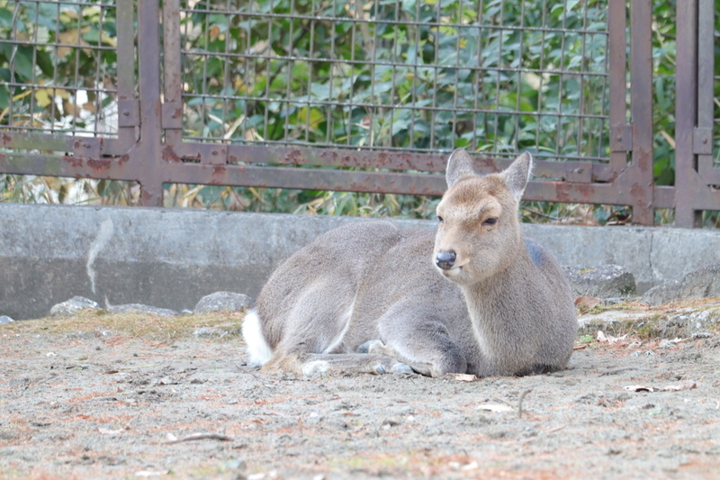 f:id:zoonimal:20210104145857j:plain