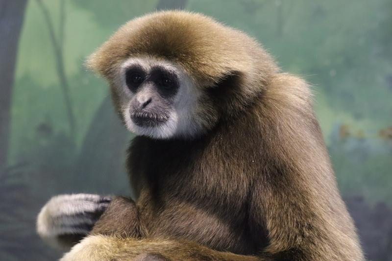 f:id:zoonimal:20210104145932j:plain