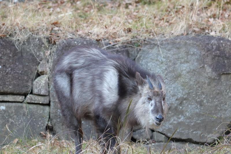 f:id:zoonimal:20210104145956j:plain