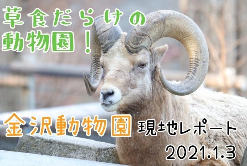 f:id:zoonimal:20210105175348j:plain