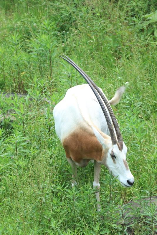 f:id:zoonimal:20210109234047j:plain