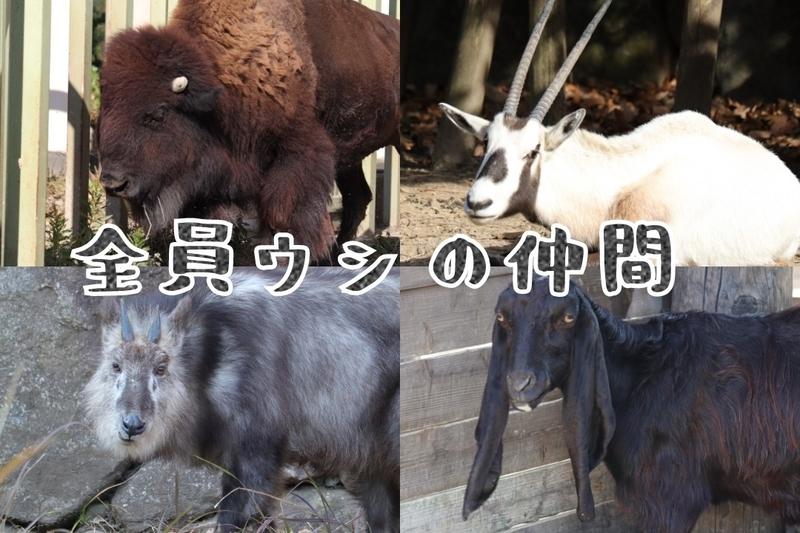 f:id:zoonimal:20210110143814j:plain
